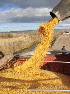 File photo courtesy of Idaho Farm Bureau