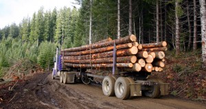 Groups sue to stop western Idaho logging project